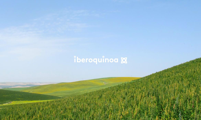 Iberoquinoa_EstudioFernandoFuentes_04